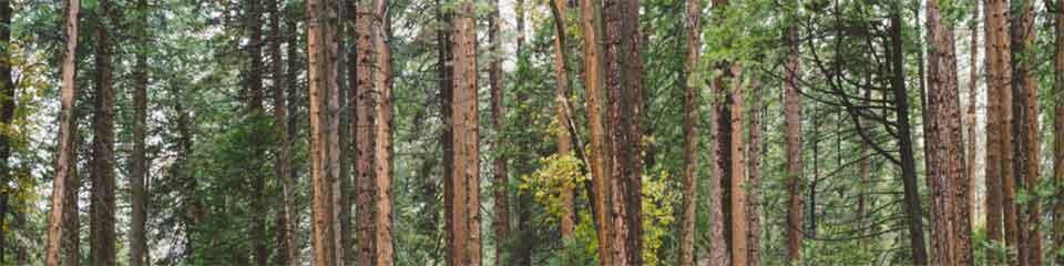 Formaldehyde Levels In Wood Flooring