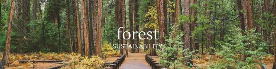 A Look At Forest Sustainability