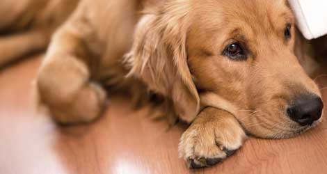 Why-Wood-Floors-Are-Best-For-Kids-And-Pets